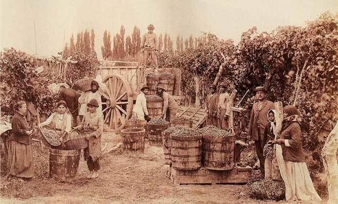Vendimia agraria