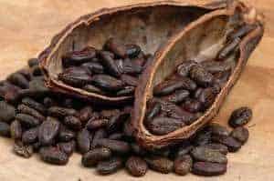 El cacao, moneda de intercambio