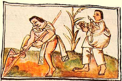 Cultivo del Maiz, Códice Florentino