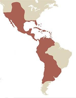 Imperio español en América