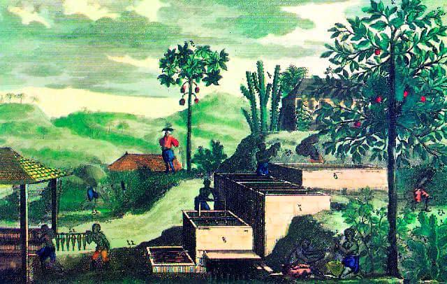Plantación de índigo de la compañía de Caracas